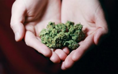 Cannabis and the Five Senses